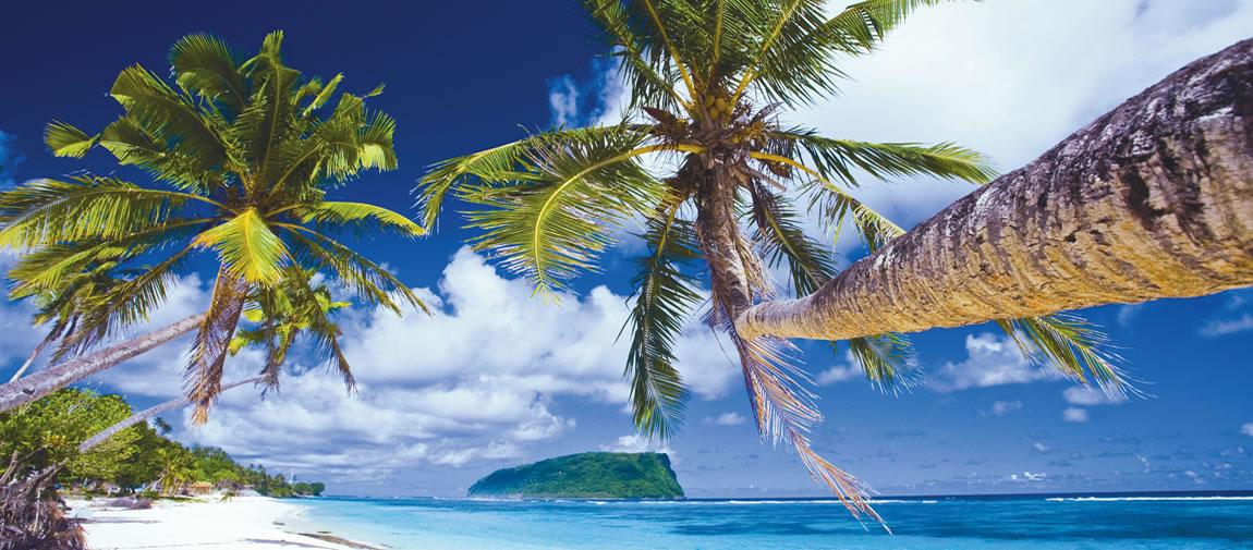 Palm trees in Samoa