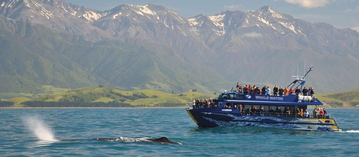 Whale Watch Kaikoura
