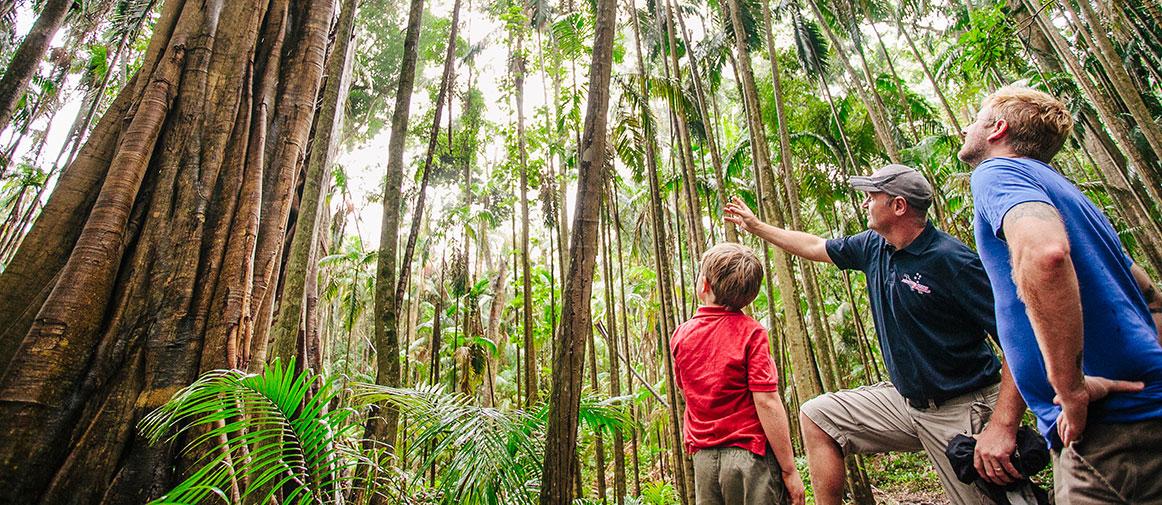 Mooloolah River National Park rainforest