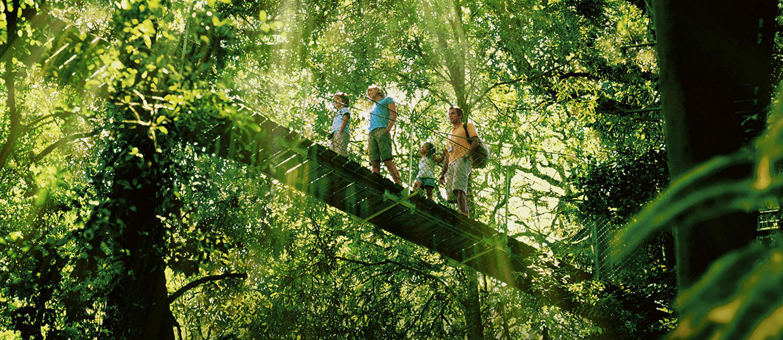 O'Reilly's Tree Top Walk