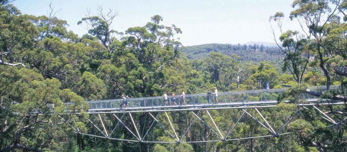 Giant Tree Top Walk