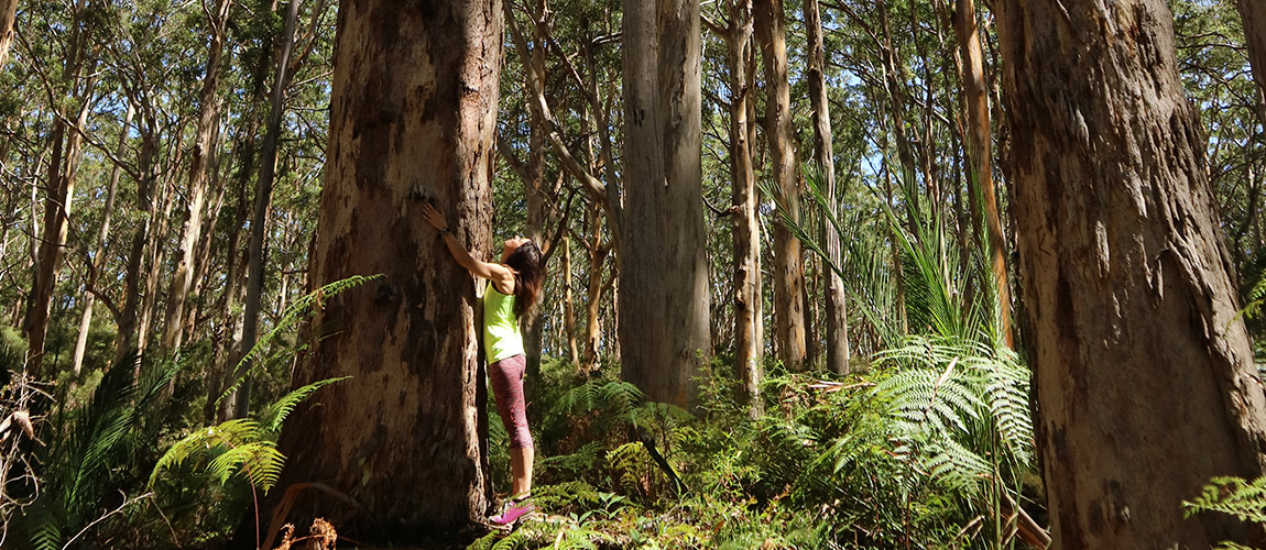 Julia Bradbury hugging a karri tree