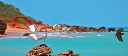 a close up of a bird flying over a beach