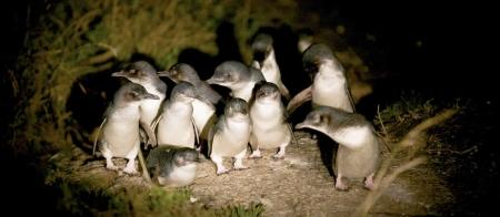 a flock of seagulls standing on grass