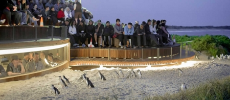 a flock of seagulls are standing in front of a crowd