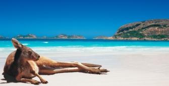 a dog sitting on a beach near a body of water