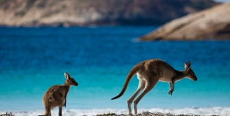 a kangaroo standing in a body of water