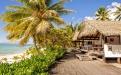 a beach with a palm tree