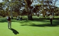 a man playing golf in a park