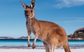 an animal standing on a beach