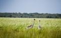 a bird walking on a grassy field