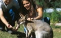 a kangaroo holding a baby