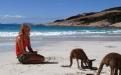 a dog standing on a beach