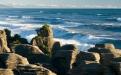 a flock of seagulls standing on a rock near the ocean