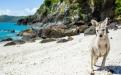 an animal standing on a rocky beach
