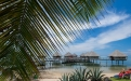 a row of palm trees on a beach