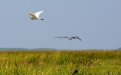 a flock of seagulls flying over a grassy field
