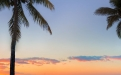 a beach with a palm tree in front of a sunset
