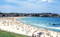 a flock of seagulls standing on a beach with Bondi Beach in the background