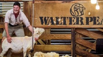 a man holding a sheep