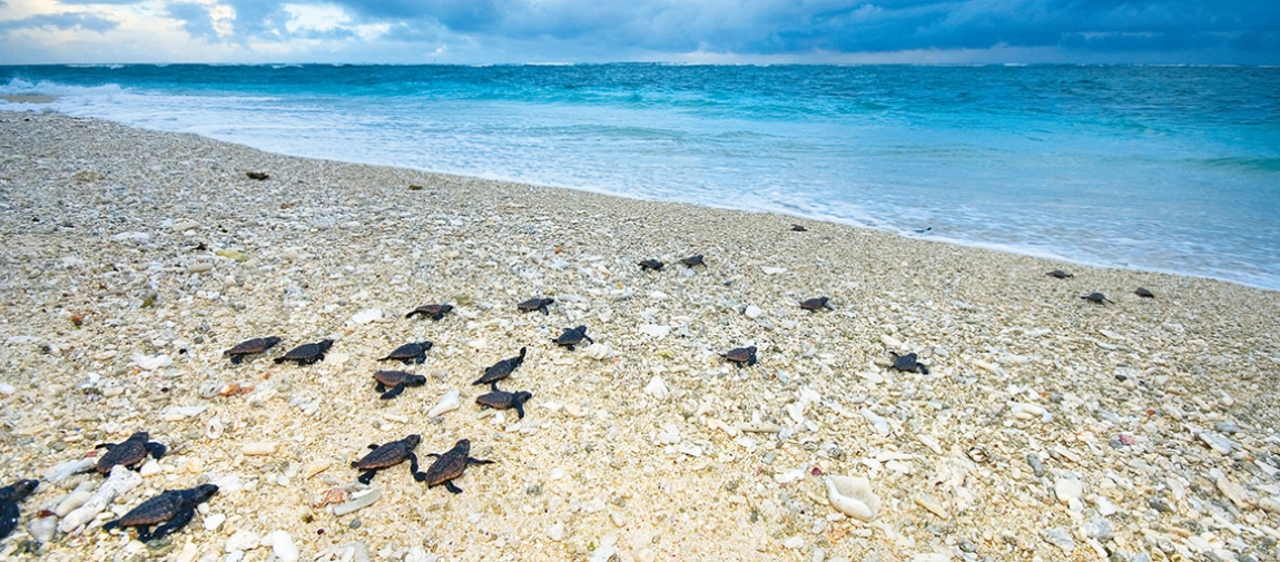 a flock of birds sitting on top of a sandy beach