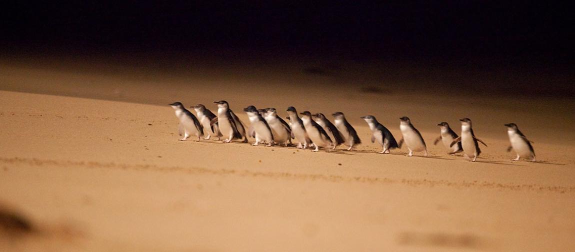 a flock of seagulls standing on a beach